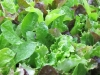 saladmix